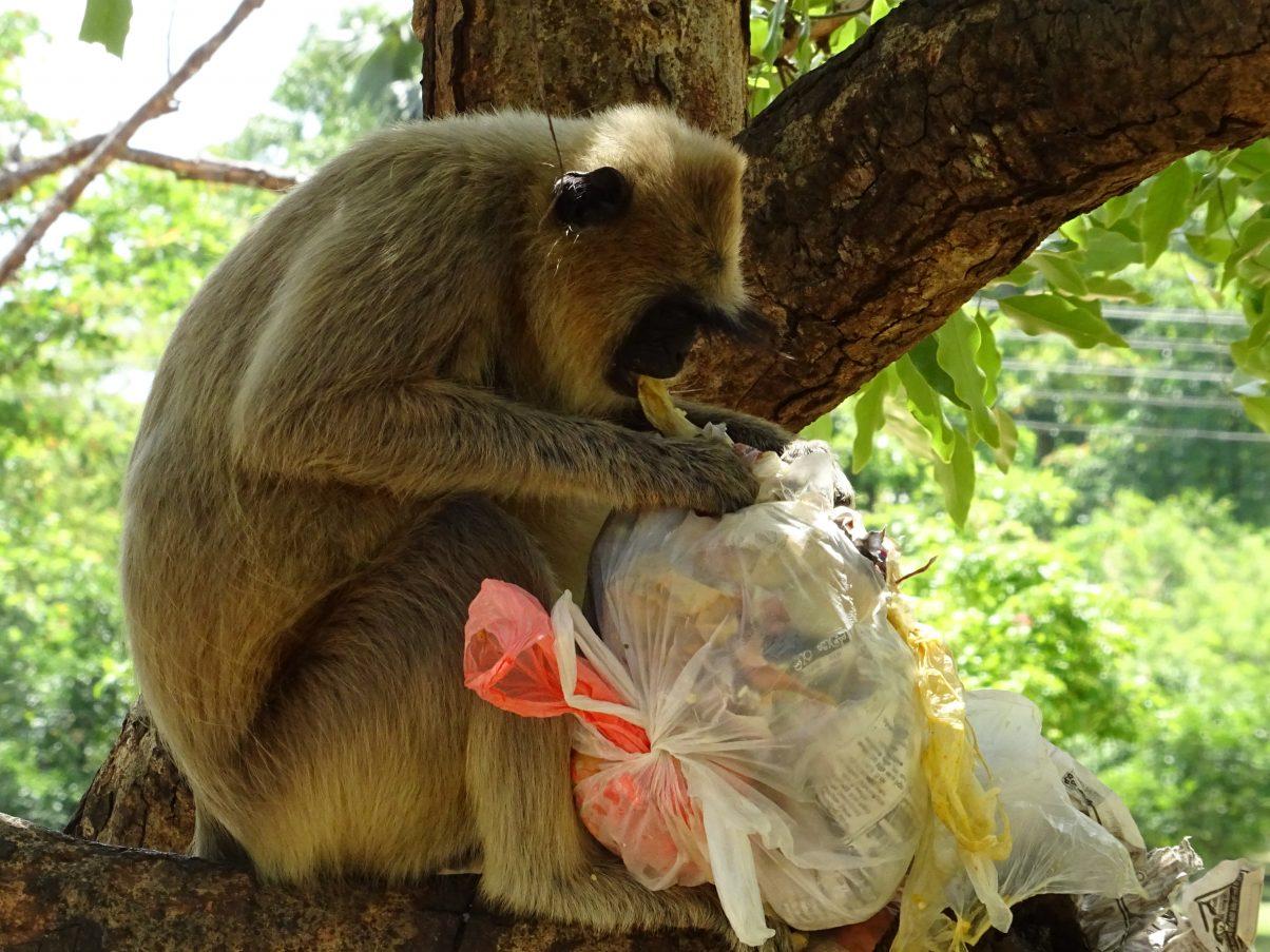 The Ultimate Vagabond's Bucket List for Sri Lanka