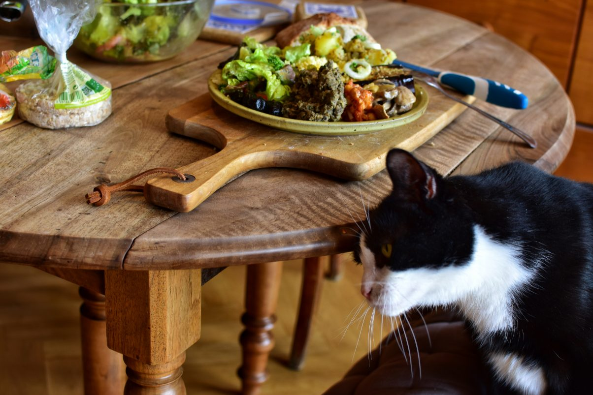 Cat next to dinner table