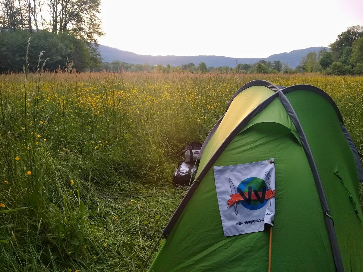Camping in flower field