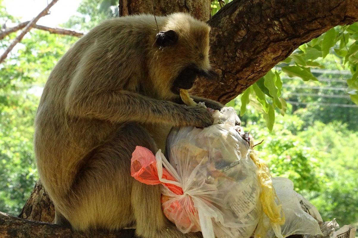 Money eating rubbish