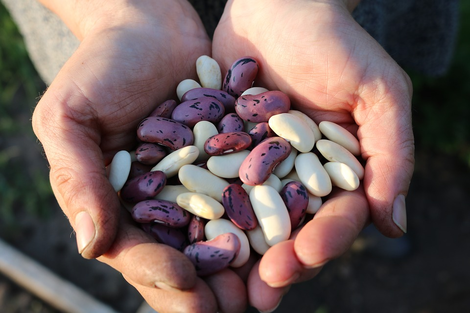 Beans in hands