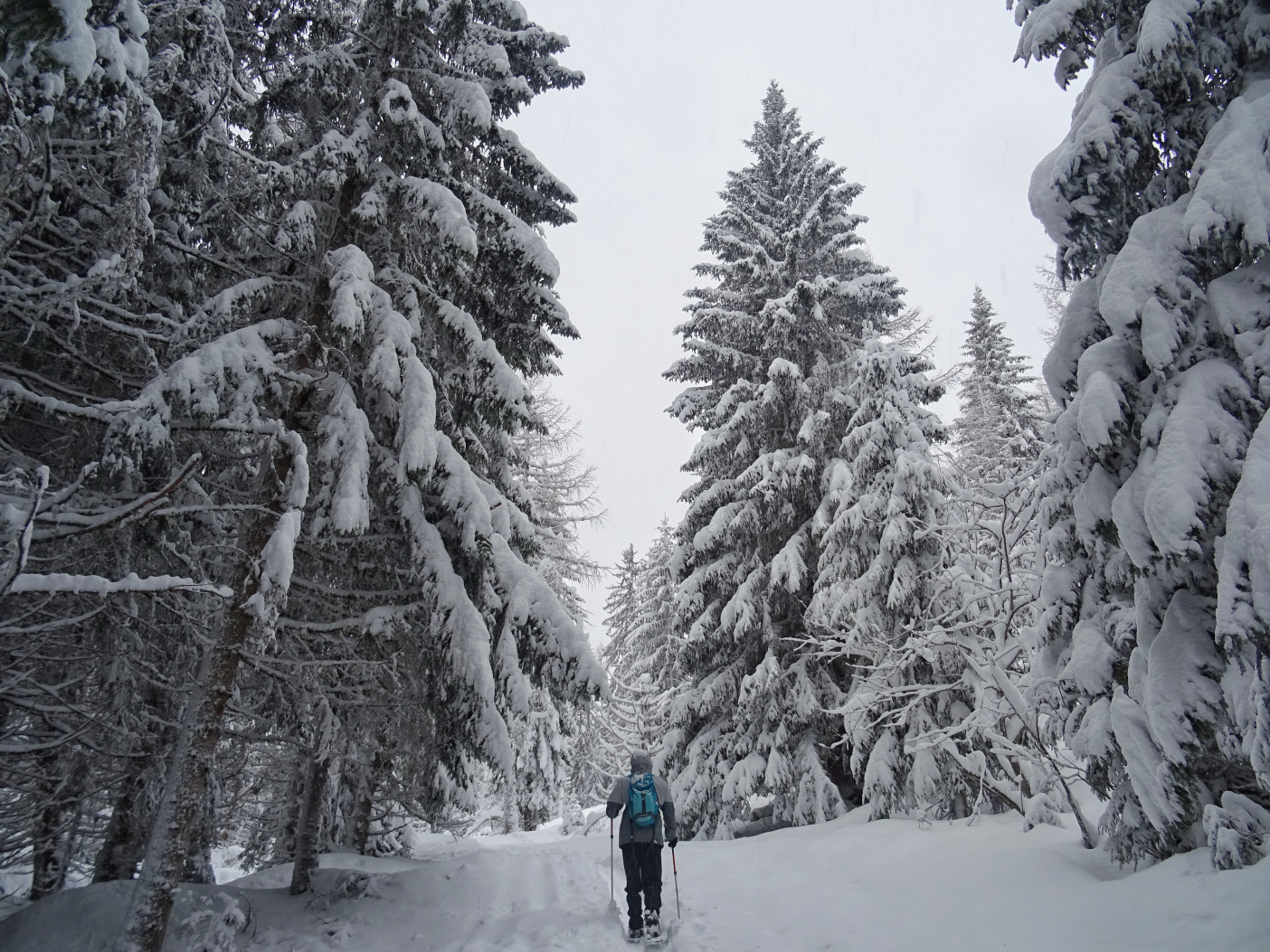Man walking through snowy woods