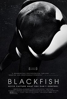 Blackfish wildlife documentary