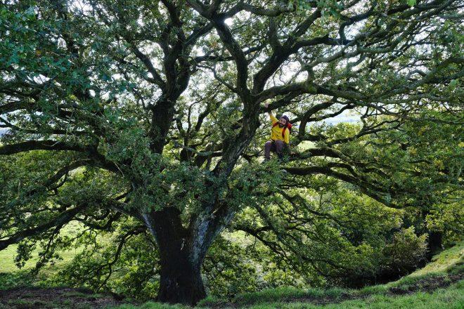 Man climbing a tree